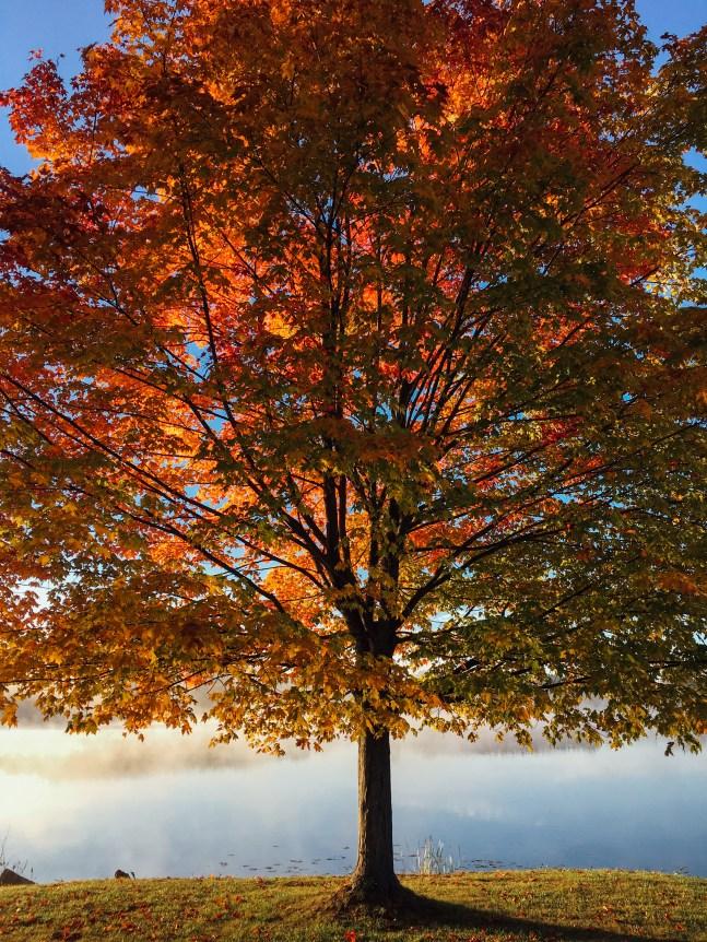 fall43.jpg